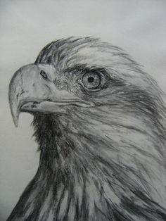 Águila hecho a carboncillo. Realizado por Paqui González del Castillo.
