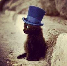 blue hat black cat