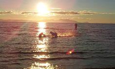 Doggy play time..... Fun in the sea Ayr Beach Scotland