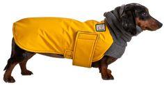 {doxie winter coat} waterproof + cozy!
