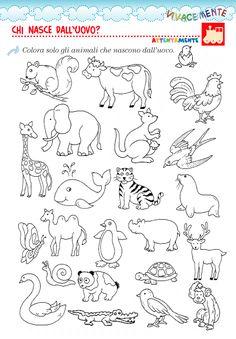 Blog su creatività e metacognizione. Schede didattiche per la scuola primaria e dell'infanzia. Kids Math Worksheets, Kindergarten Activities, Activities For Kids, Farm Animals Preschool, Easter Bunny Colouring, Quiet Book Templates, Geography For Kids, Scrapbook Patterns, Pencil Drawings Of Animals