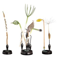 R. Brendel Botanical Models | From a unique collection of antique and modern models and miniatures at https://www.1stdibs.com/furniture/more-furniture-collectibles/models-miniatures/