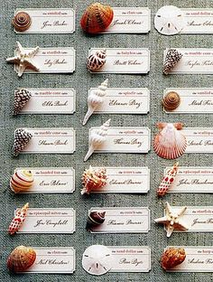 Shells. Labels for place cards