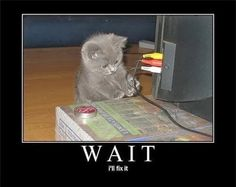One of our best from tech support! #techhumor #kitty #cat