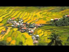 """The Rice Terraces are commonly referred to by Filipinos as the """"Eighth Wonder of the World"""". It is commonly thought that the terraces were built with minimal equipment, largely by hand. The terraces are located approximately 1500 meters (5000 ft) above sea level and cover 10,360 square kilometers (about 4000 square miles) of mountainside. They are fed by an ancient irrigation system from the rainforests above the terraces."""