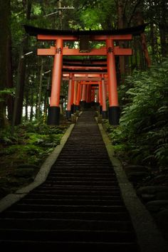 One of my favorite places on earth: Fushimi Inari-taisha, Kyoto, Japan Okinawa, Places Around The World, Around The Worlds, Beautiful World, Beautiful Places, Japanese Shrine, Fushimi Inari Taisha, Art Asiatique, Kyushu