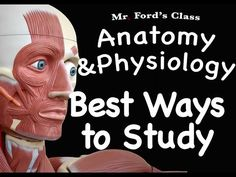 22 Best Anatomy images in 2019 | Anatomy drawing, Human ...