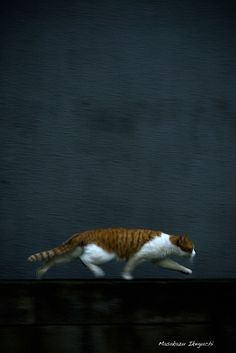 By Masakazu Ikeguchi...i dream of taking a picture of my cat like this. I've got a couple thousand tries