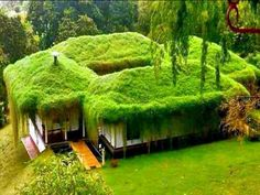 Grass is a great form of  insulation.. truly a green houes