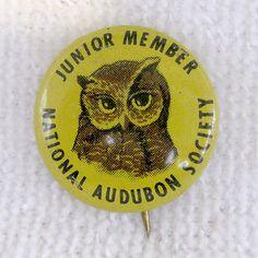 Very Hard to Find RARE National Audubon Society Owl Pin Button Junior Member Vtg   eBay