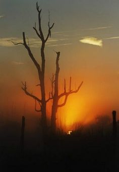 The sun rises through a fog over the Estero Bay State Preserve Park in south Fort Myers on Monday 2/4/2012. In the foreground is a dead malaleuca tree. http://www.news-press.com/article/20131231/LIFESTYLES/312310046?gcheck=1