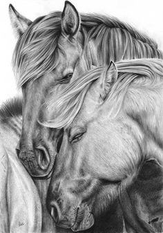 This is a beautiful gathering of thought. A collaboration of strength ,warmth an. Horse Pencil Drawing, Horse Drawings, Pencil Art Drawings, Animal Drawings, Animal Sketches, Art Sketches, Arte Equina, Horse Sketch, Horse Artwork