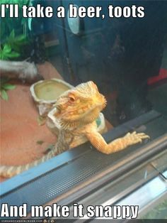 So a Bearded Dragon Walks Into a Bar...
