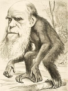 After the uproar about Charles darwin's book, The Origin of Species, artist began creating cartoons comparing him to apes. This is due to the fact that Charles Darwin mentioned how humans and apes come from a common species. Charles Darwin, Robert Darwin, Darwin Evolution, Theory Of Evolution, Human Evolution, Darwin Theory, Origin Of Species, Religion, Natural Selection
