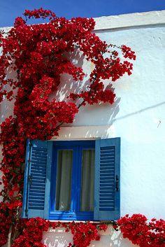 Going for a Mediterranean/Greek Islands feel for the master bedroom Greek Bedroom, Master Bedroom, Beautiful Flowers, Beautiful Places, Greek Decor, Beautiful Home Gardens, Window Box Flowers, Blue Shutters, Old Doors