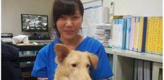 O suicídio da veterinária que sacrificou centenas de cães de rua em Taiwan