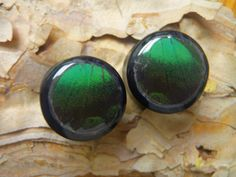 """Moth Wing Plugs 3/4""""  Double Flare  Papilio by AsanaNaturalArts, $26.00"""
