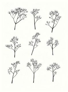 Image result for baby's breath flower tattoo
