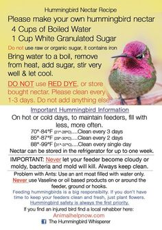 Sugar Water For Hummingbirds, How To Attract Hummingbirds, Attracting Hummingbirds, Flowers For Hummingbirds, Hummingbird Feeder Recipe, Recipe For Hummingbird Nectar, Humming Bird Nectar Recipe, Homemade Hummingbird Food, Humming Bird Feeders