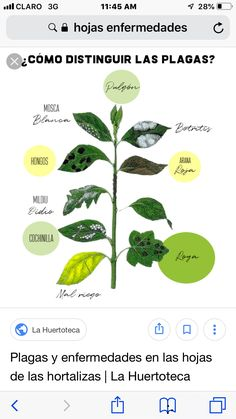 Mosquitos, Plant Leaves, Whitefly, Woodlice, Irrigation, Vegetables Garden, Fungi, Plants
