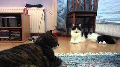 Kasper & Mini - Friday chilling