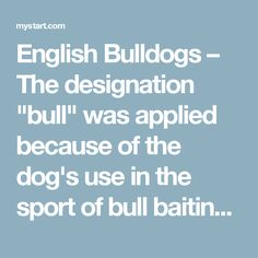 """English Bulldogs – The designation """"bull"""" was applied because of the dog's use in the sport ofbull baiting, even though the ancient Bulldog was stronger and bigger than the one we know today."""