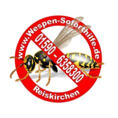 Entfernung von Wespen, Hummeln und Hornissen in Gießen, Wetterau und Vogelsberg. Wasp, Bumble Bees, Distance, First Aid
