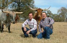 Box Z Ranch - Texas Longhorn Cattle Ranch