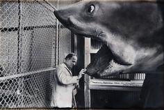 "Ingmar Bergman and the shark from ""Jaws"""
