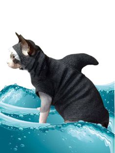 Shark Costume Kitten Shark Cat Sweater Only, Hat sold separately. Shark Week, Cat Costume Halloween Dog Shirt Sphynx Clothes Dog Clothes Pet Costume  This is for the SHIRT only.  To buy the matching hat go here: https://www.etsy.com/listing/230659945/shark-week-shark-costume-hat-only-pet?ref=listings_manager_grid  Please use our hat/shirt size guide click, tap or swipe on the first picture to bring it up. This is the original Kitten Shark Cat Sweater made by...