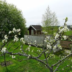 Mia's garden in May (Norway)