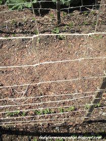 Lady Farmer's Garden: Weaving the pea trellis Lady Farmer's Garden: Weben das Erbsengitter Pea Trellis, Garden Trellis, Grow Your Own Food, Grow Food, Outdoor Projects, Outdoor Ideas, Vegetable Garden, Twine, Gardening Tips