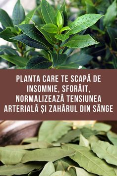 Sciatica, Natural Remedies, Diabetes, Plant Leaves, Healthy, Nature, Medicine, Therapy, Diet