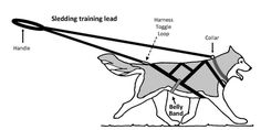 sled dog harness - Google Search