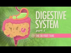 Digestive System, Part 1: Crash Course A&P #33 - YouTube