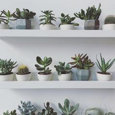 This this this, I wish my home looked like this! Photo by @gatherhomelifestyle || @succulentcity #succulentcity #succulents #succulent #succulove #succulents_only #succulentlove #succulentgarden #succulentgarden