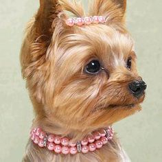 Pearl Pet Jewelry Necklace