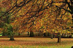 Autumn leaves (Hyde Park, London, England) by Ann Cameron