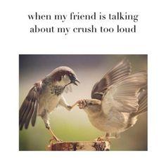 Crush Memes We Like