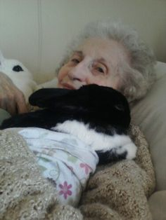 Rabbits as therapy animals; we'd love to see more rabbits (and their owners) come in for evaluation.  Rabbits are great in nursing homes.