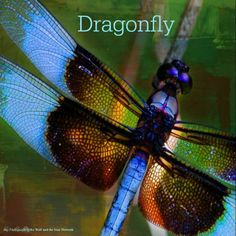 October 12, 2015 Totem Card of the Day - Dragonfly :http://bearmedicinewalker.com/2015/10/12/october-12-2015-totem-card-of-the-day-dragonfly/