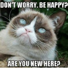 Sure, I'm not going to deny that I like Tarder Sauce, the Grumpy Cat. Or, I should say that I appreciate the memes that sprang up around this cat's…interesting likeness. Memes Humor, Cat Memes, Funny Memes, Hilarious, Funny Quotes, Song Memes, Sarcastic Memes, Funny Comedy, Humor Quotes