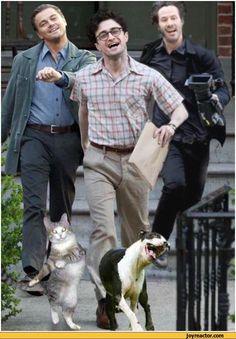 auto-Harry-Potter-strutting-leo-memes-197330.jpeg (470×676)