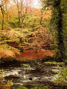 Hardcastle Crags, UK October 2012. A favourite spot for the Brontes. Nr Hebden Bridge......
