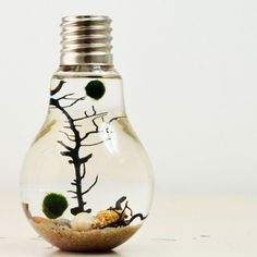 Marimo Aqua Terrarium// Lightbulb// Desk by PinkSerissa on Etsy