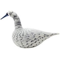 Whooper Swan - Grey