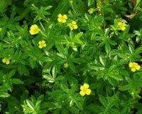 Čaj na vředy Herbs, Blog, Herb, Spice