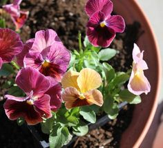 Planting Flower Pots 101 - One Good Thing by Jillee