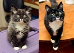 Grown-Up Cats Recreate Childhood Photos Photos) - World's largest collection of cat memes and other animals Cute Cats And Kittens, I Love Cats, Crazy Cat Lady, Crazy Cats, Funny Animals, Cute Animals, Funny Cats, Kitten Rescue, Cute Animal Videos