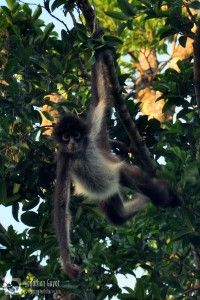 A la d couverte des orangs outans sumatra inspirations voyages pinterest b b orang - Araignee des jardins en 6 lettres ...